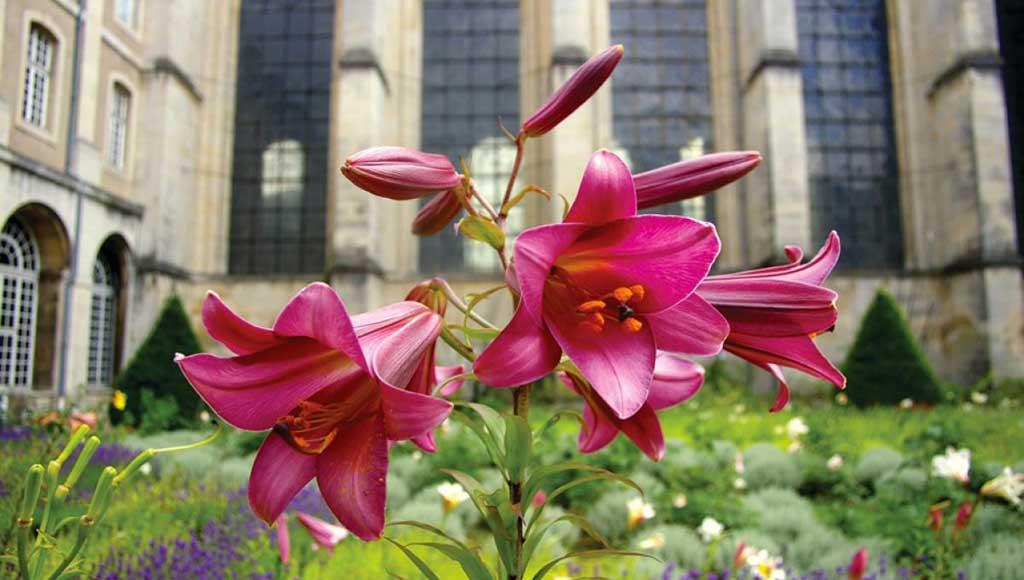 jardins-entre-reve-et-realite-bis-metz-today