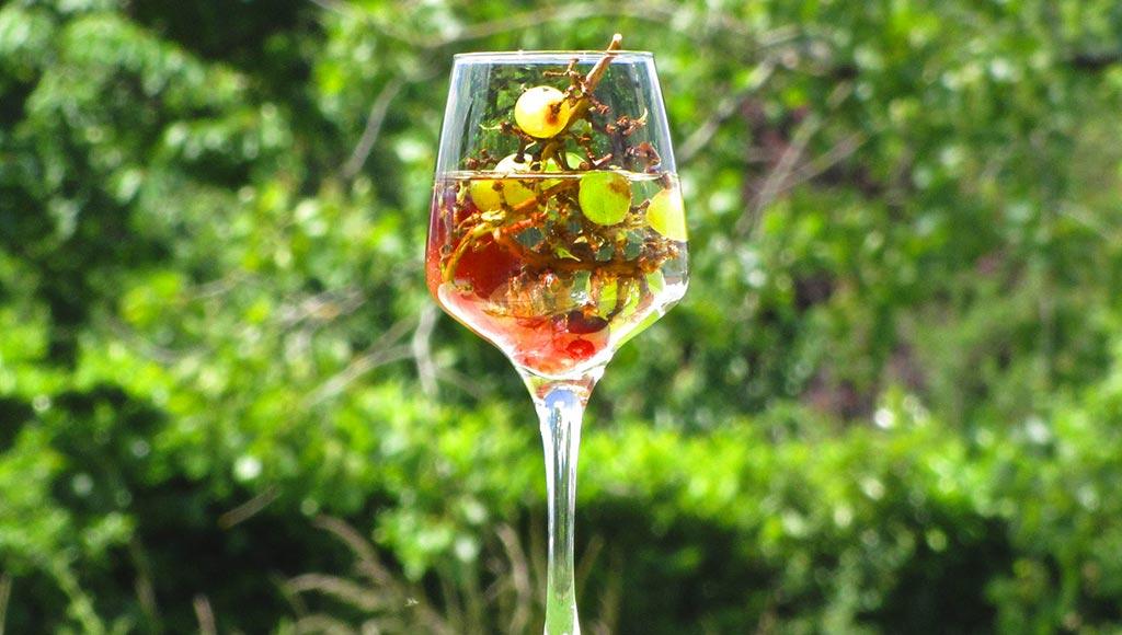 cepages-et-tanins-vins-bis-metz-today