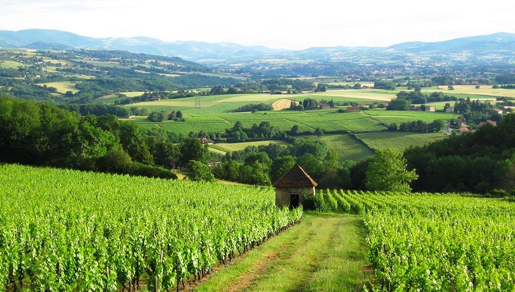 beaujolais-sensuel-vignoble-metz-today