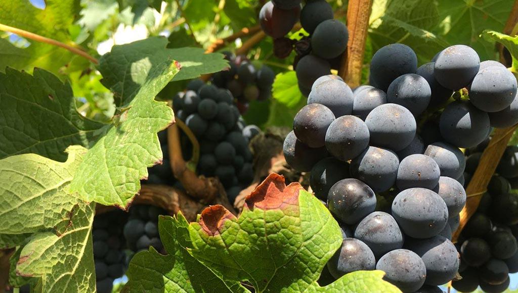 vins-bordeaux-bis-metz-today