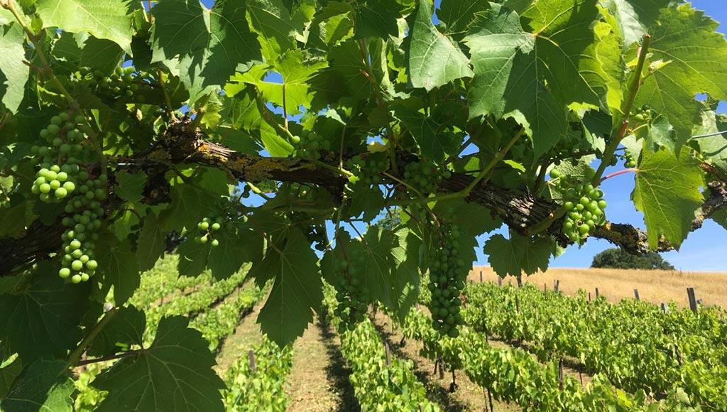 marsal-derniere-vigne-familiale-metz-vins