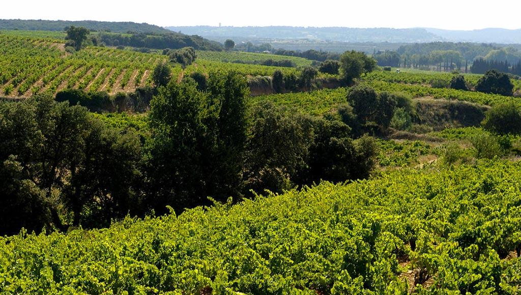 vin-de-tavel-bis2-metz-today