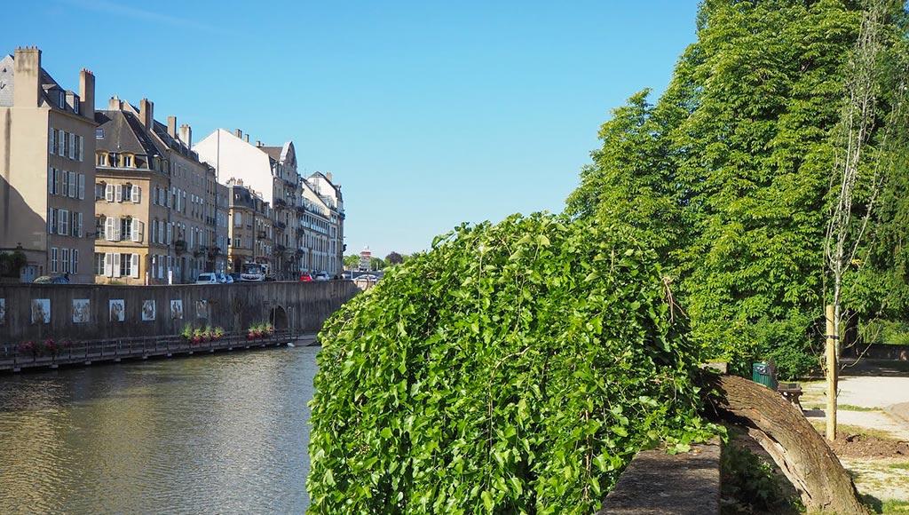 metz-ville-verte-arbres-today